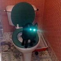 кошачьи светящиеся глаза на унитазе