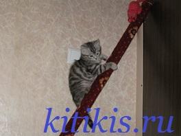 котёнок скалалаз