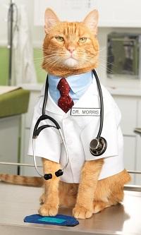 кот в медецинском халате