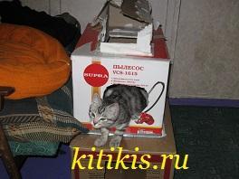 кот пылесос