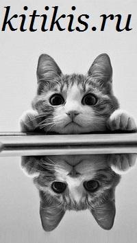 отражение кота
