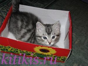 кеша в коробке