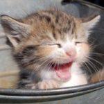 котёнок в ведре