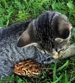 кот и жаба
