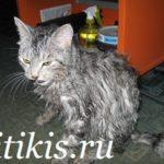 мокрый кот кеша