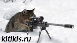 кот с пулимётом