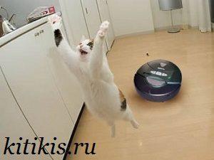 прыгающий кот