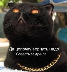 кошка с цепочкой
