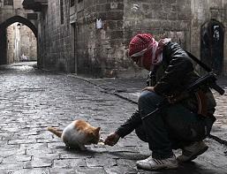 кормит кошку