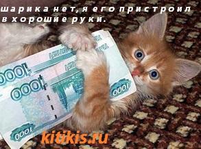 котёнок с деньгами