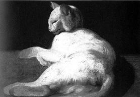отдыхающая белая кошка
