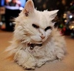 кошка Блеки