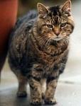 кошка долгожитель люси