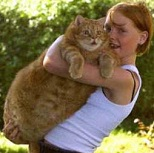 самый толстый кот из дании