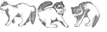 з кошачьи позы