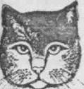 играющая или охотящаясмя кошка