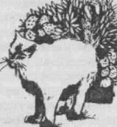 кошка метит куст