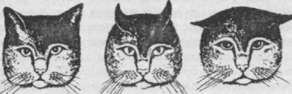 положение ушей у кошки