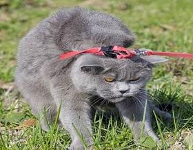 упрямый кот