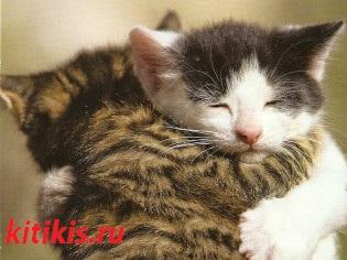 два котёнка обнимаются