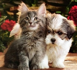 котёнок и щенок