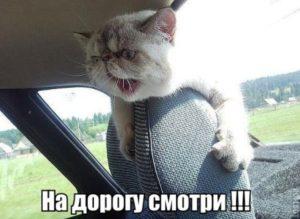 кот кричит на дорогу смотри