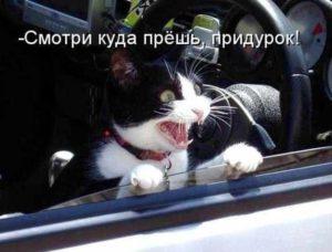 кот куда прёшь