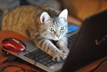 кот пишет письмо