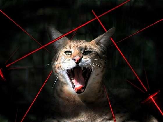 кот и лазерные указки