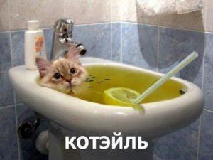 кот коктель