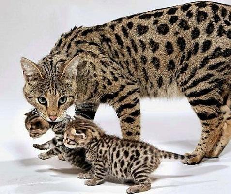 ашера с котятами