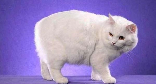 кимрик-белый