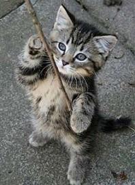 котёнок-с-палкой.