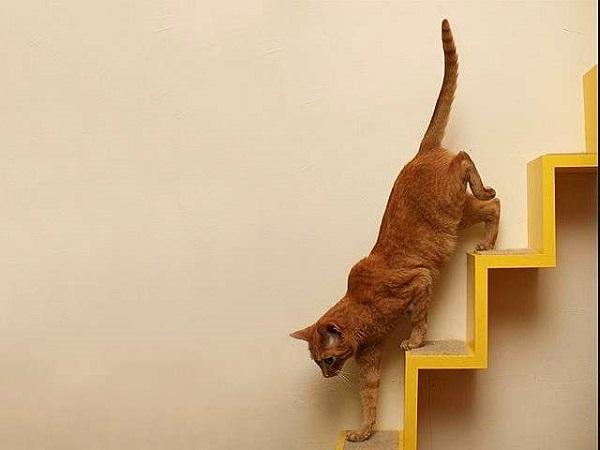 кот-на-лестнице