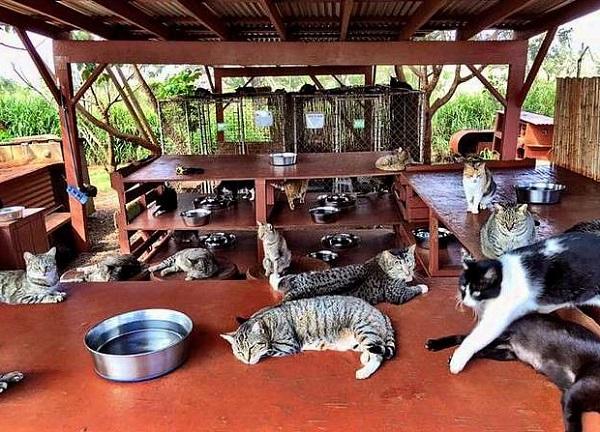 множиство кошек