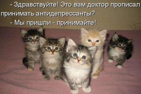 котята антидерисант