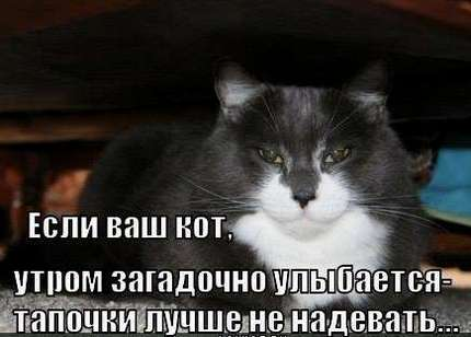 кот загадочноо улыбается