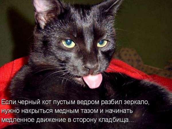 чёрный кот и медный таз