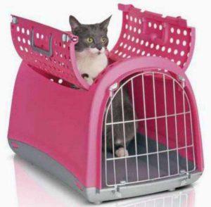 кошка в переноске открытый верх