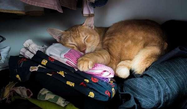 рыжий спит в шкафу