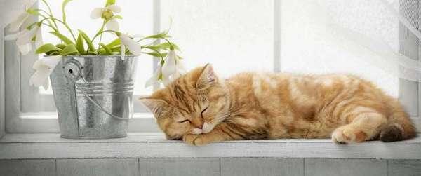 рыжый спит на подоконнике