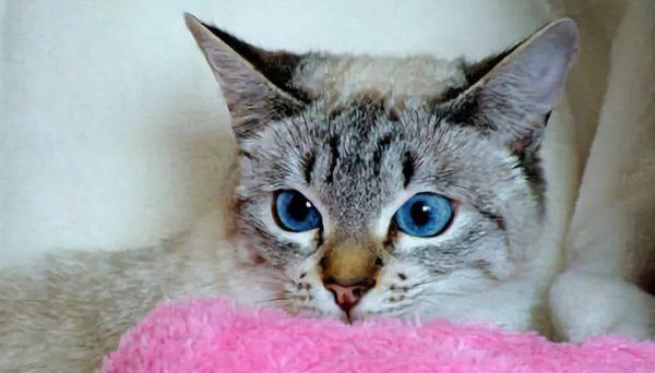 ещё с голубыми глазами