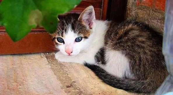 котёнок охос азулес