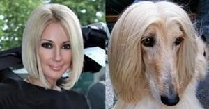 Сходствоо человека с собакой