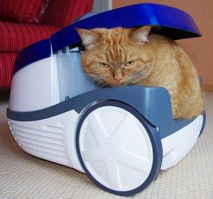 кот испытывает пылесос