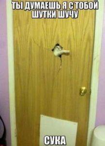 кот ломает дверь фото для блога