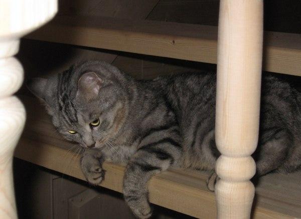 Кеша кот на лестнице
