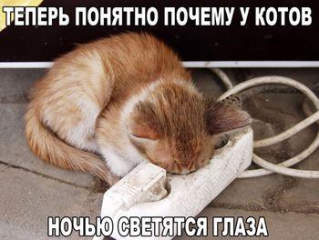 Кот в розетке