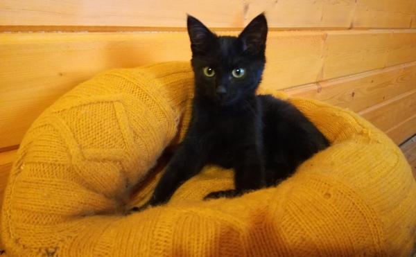 Котёнок ластик.