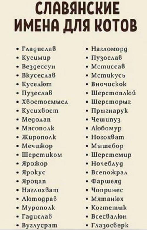 Славянские имена для котов